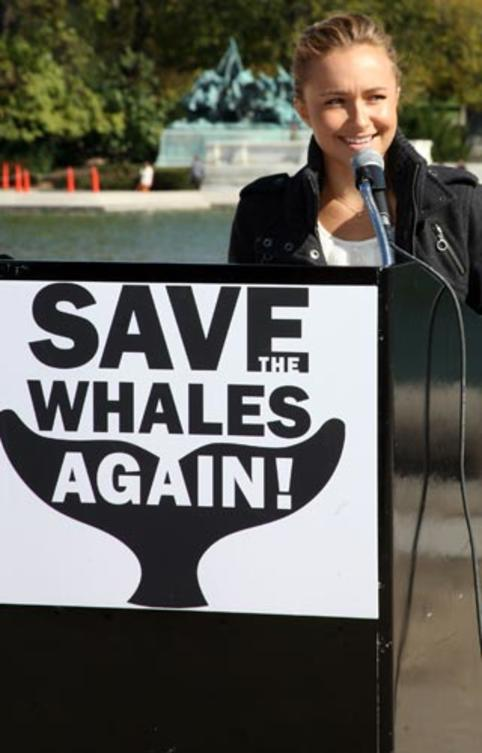 interview-hayden-panettiere-save-whales